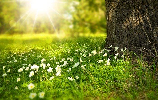 明るい草原